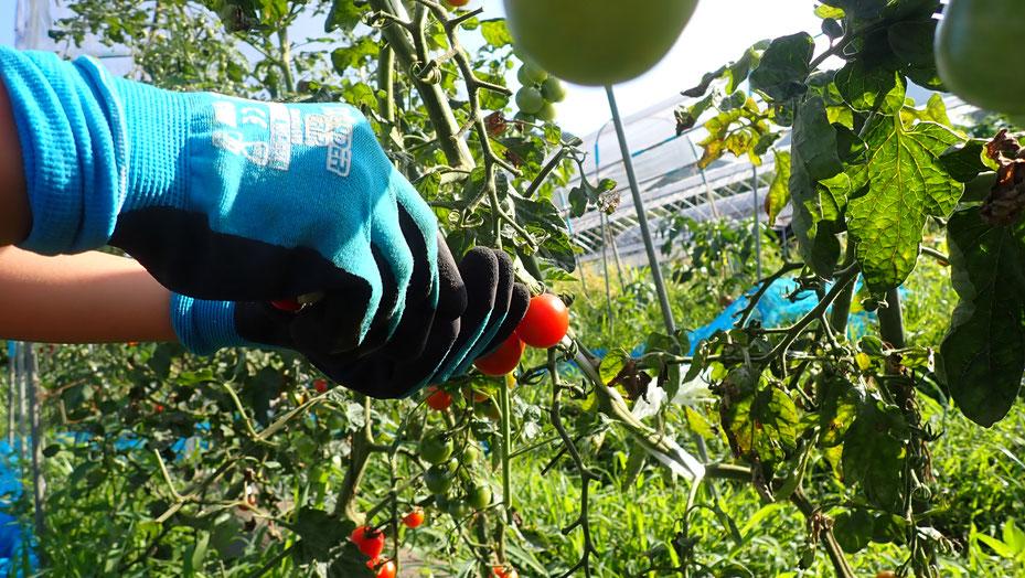 親子で野菜づくり体験@さとやま農学校・すどう農園
