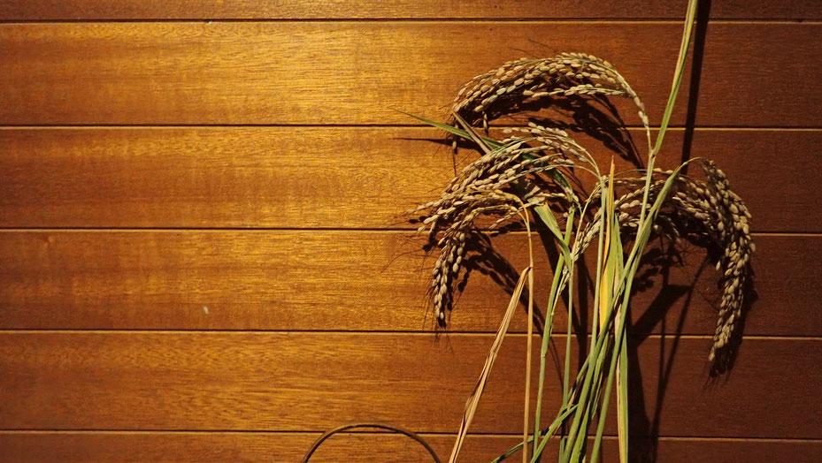 古代米の自然農@さとやま農学校・すどう農園