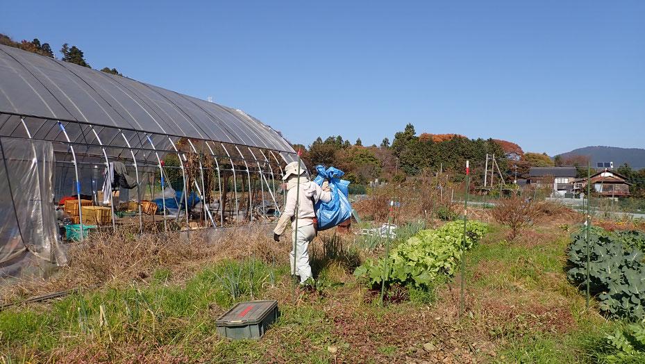 大豆の無農薬栽培を野菜作り教室で学ぶ@さとやま農学校