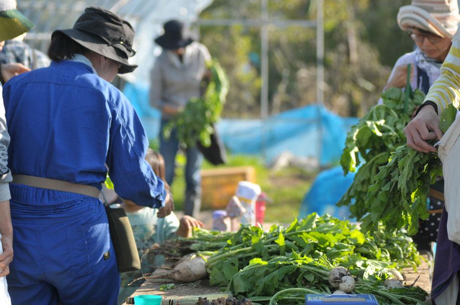 自然栽培 固定種 農業体験首都圏 体験農場首都圏 野菜作り教室首都圏  さとやま農学校 無農薬栽培