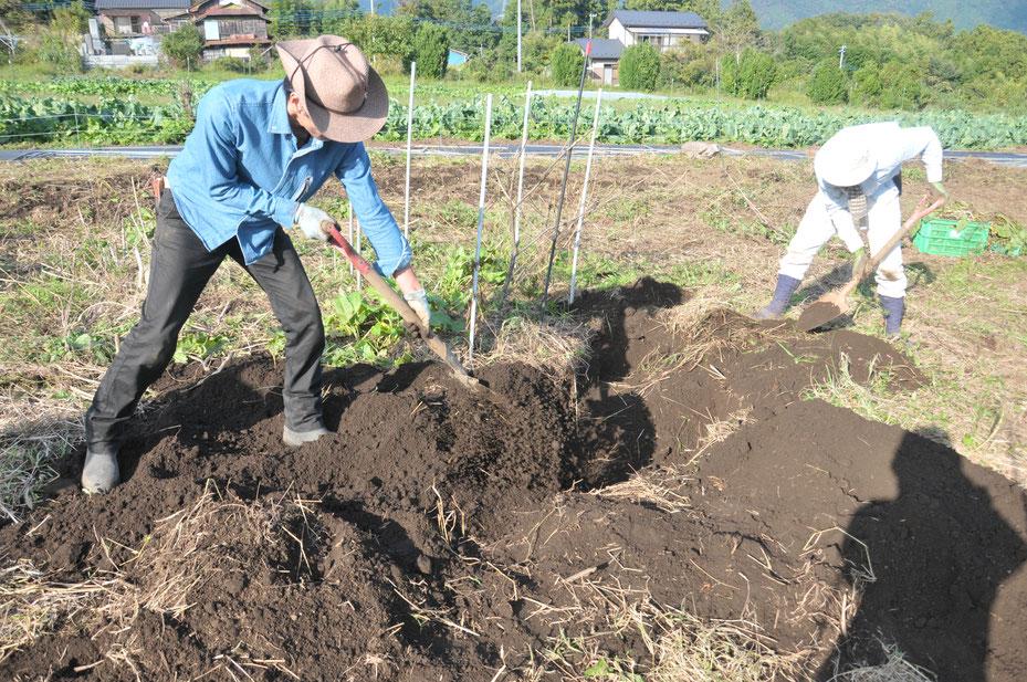 無農薬栽培のヤマイモ 自然栽培 固定種 農業体験 体験農場 野菜作り教室  さとやま農学校