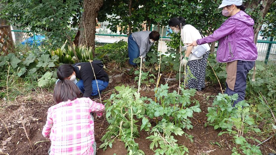 自然農の野菜づくり体験教室・街で自然農@世田谷ものづくり学校・すどう農園