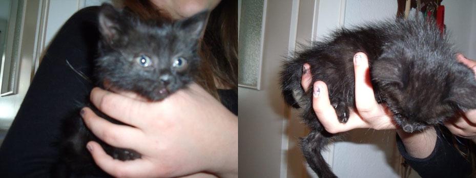 Findelkätzchen - dieses kleine Kätzchen wird nun liebevoll aufgezogen