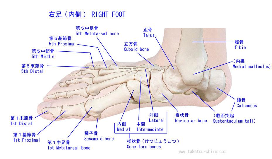 手指 - 1年生の解剖学辞典Wiki