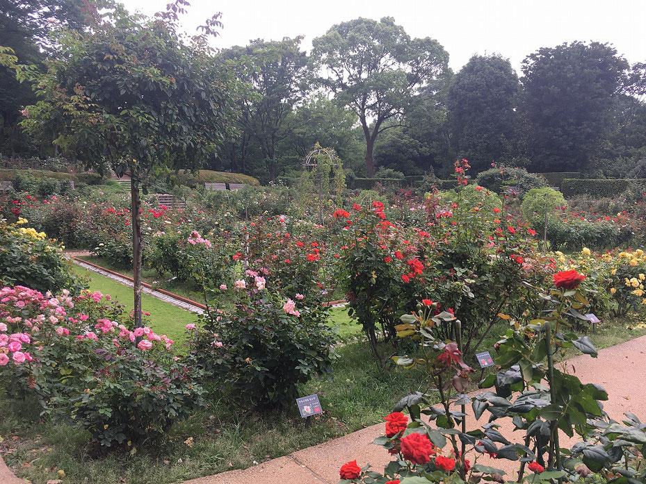 福岡市植物園の写真1