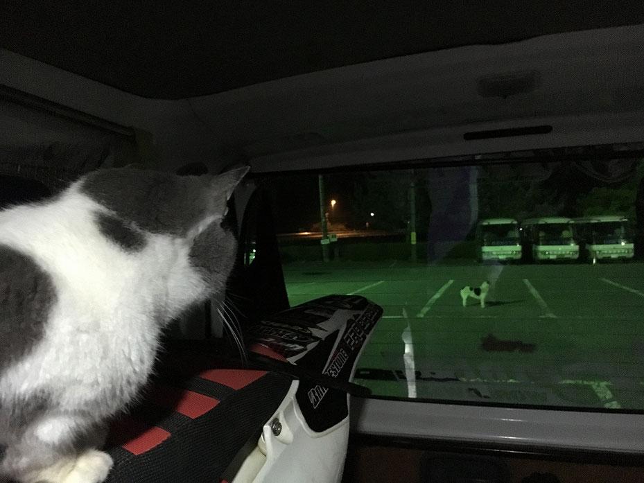 猫の花子と見知らぬ猫