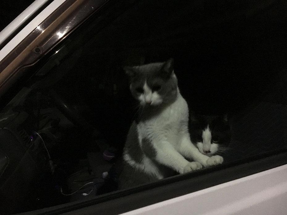 猫の花子と民