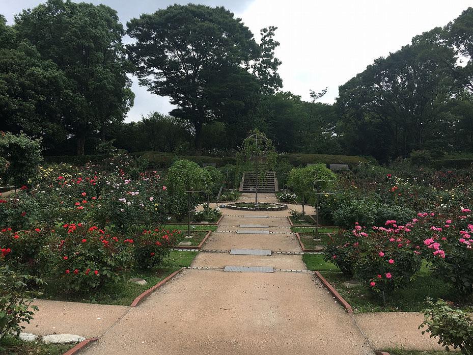 福岡市植物園の写真2