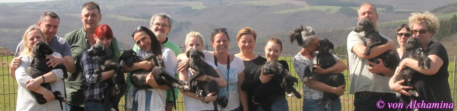 Deerhoundwelpen aus eigener Aufzucht! Unser neuer Deerhound-Wurf 2018 ist geplant! Scottish Deerhounds von Alshamina..., liebevolle Windhundzuchtstätte in Rheinland-Pfalz/Deutschland!