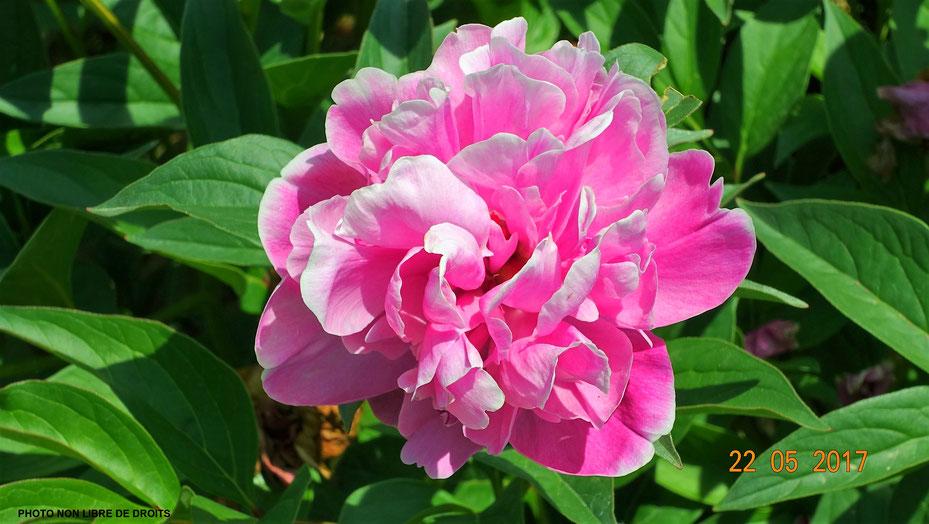 Giardino delle Rose, quartier de San Niccolo, Florence, photo non libre de droits