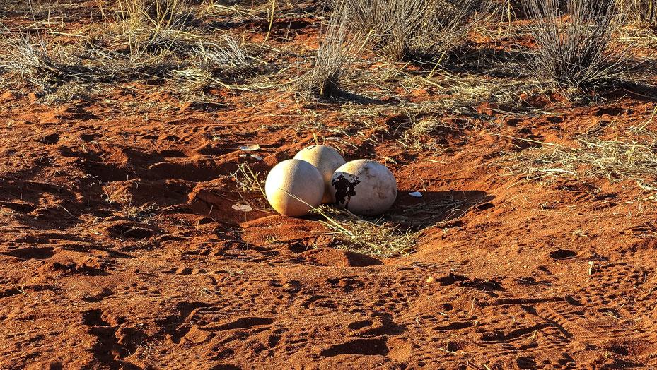 Traces de vie, désert du Kalahari, photo non libre de droits