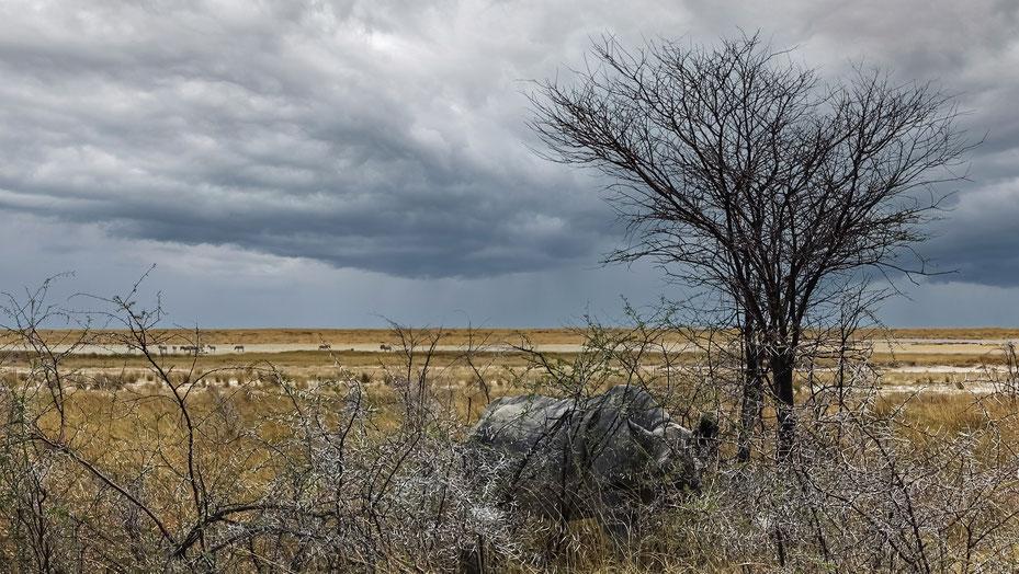 Rhinocéros caché, parc d'Etosha, photo non libre de droits