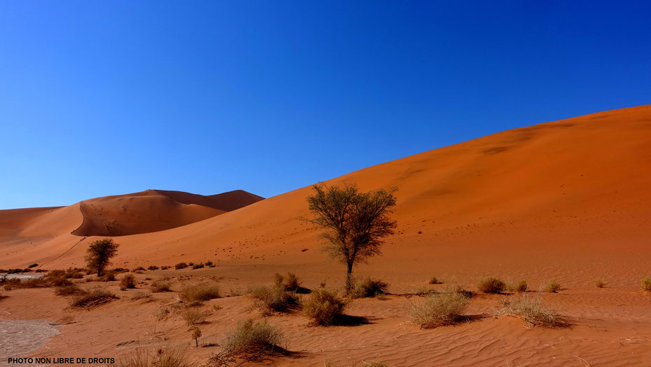 Végétation dunaire, Dunes du Namib, photo non libre de droits