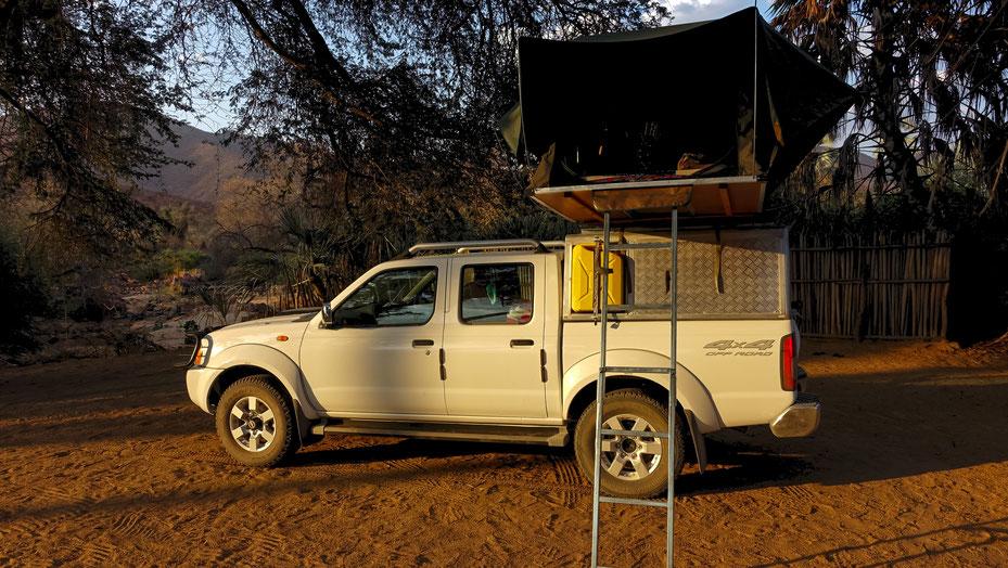 Un fauve en Namibie