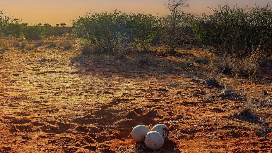 Désert du Kalahari, Namibie, photo non libre de droits