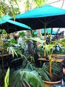 restaurant-le-jardin-marrakesch