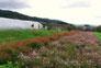 山の辺の道2   奈良県