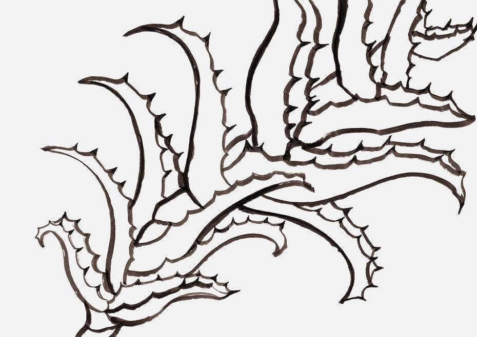 広島のイラストレーターが描く植物のイラスト