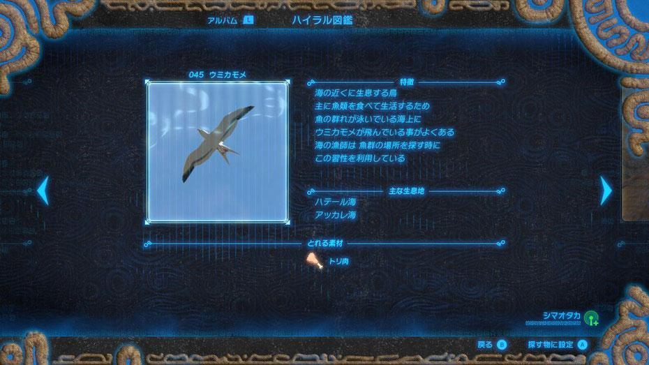 045 ウミカモメ