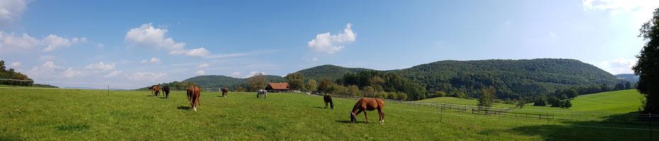 """Weidende Pferde vom Schweizer Verein """"Zweites Leben für Sportpferde"""""""