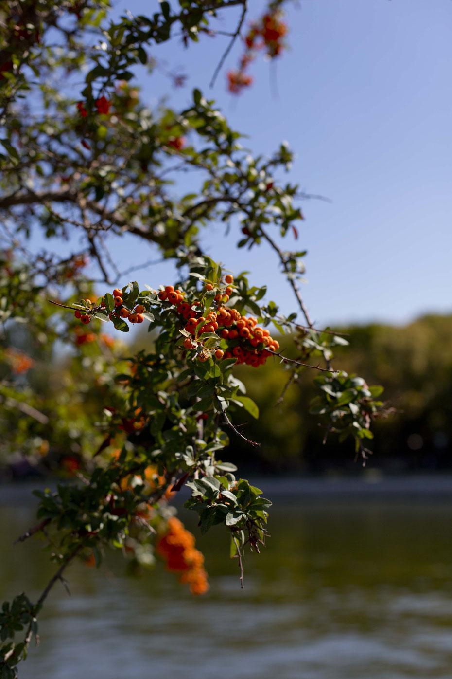 Früchte, Täbriz, Iran