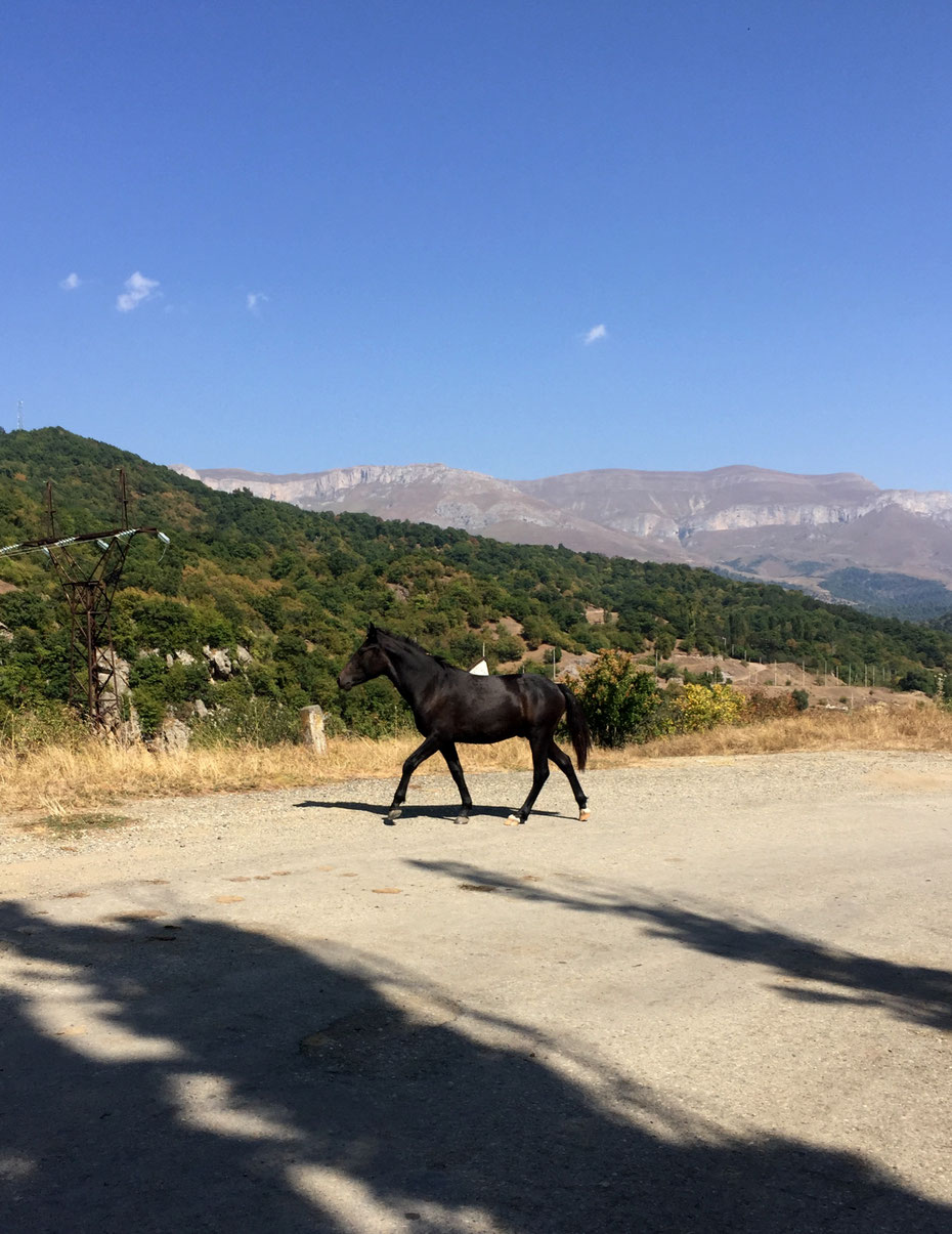 The black stallion, Dilijan national park, Armenia