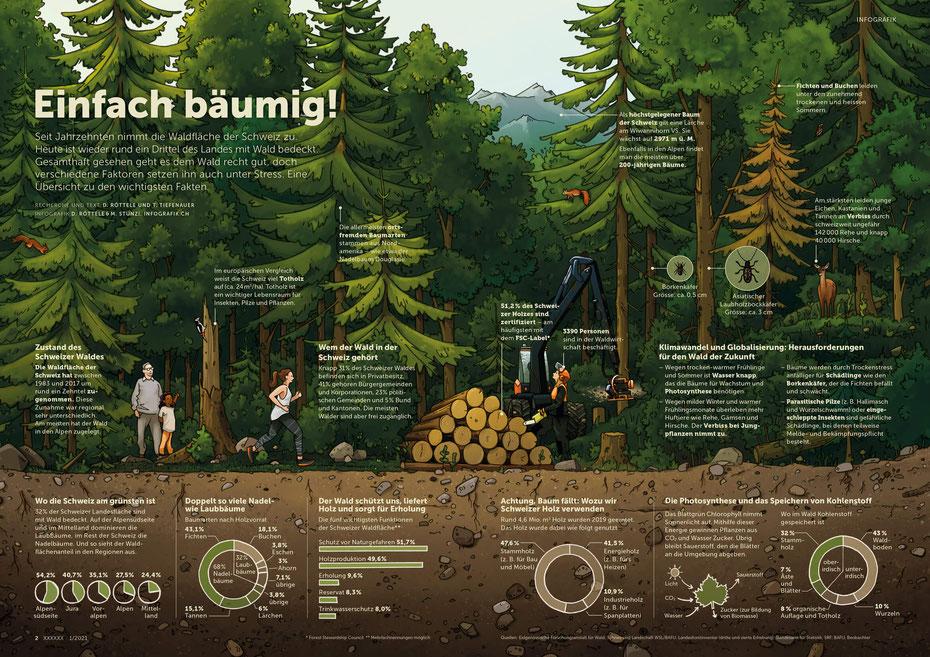 Infografik Schweizer Wald - Nadelbäume und Laubbäume, Photosynthese © Michael Stünzi