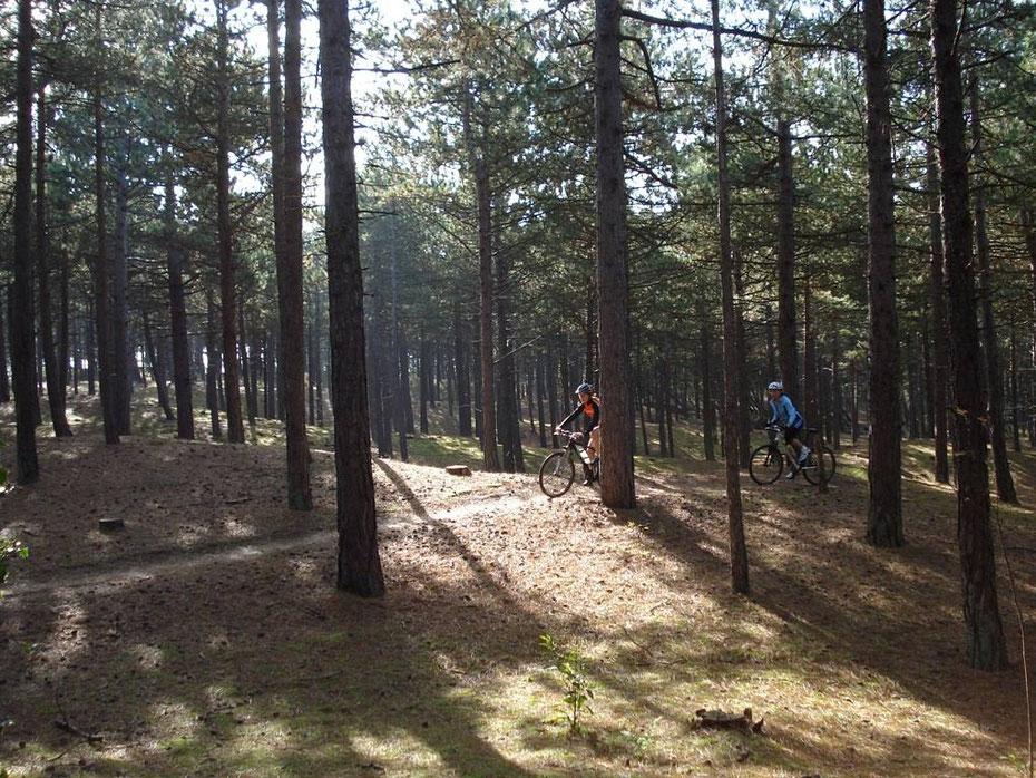 """<img src=""""image.jpg"""" alt=""""Twee mountainbikers op het mountainbike pad in landschapspark """"De Dennen"""" op Texel"""">"""