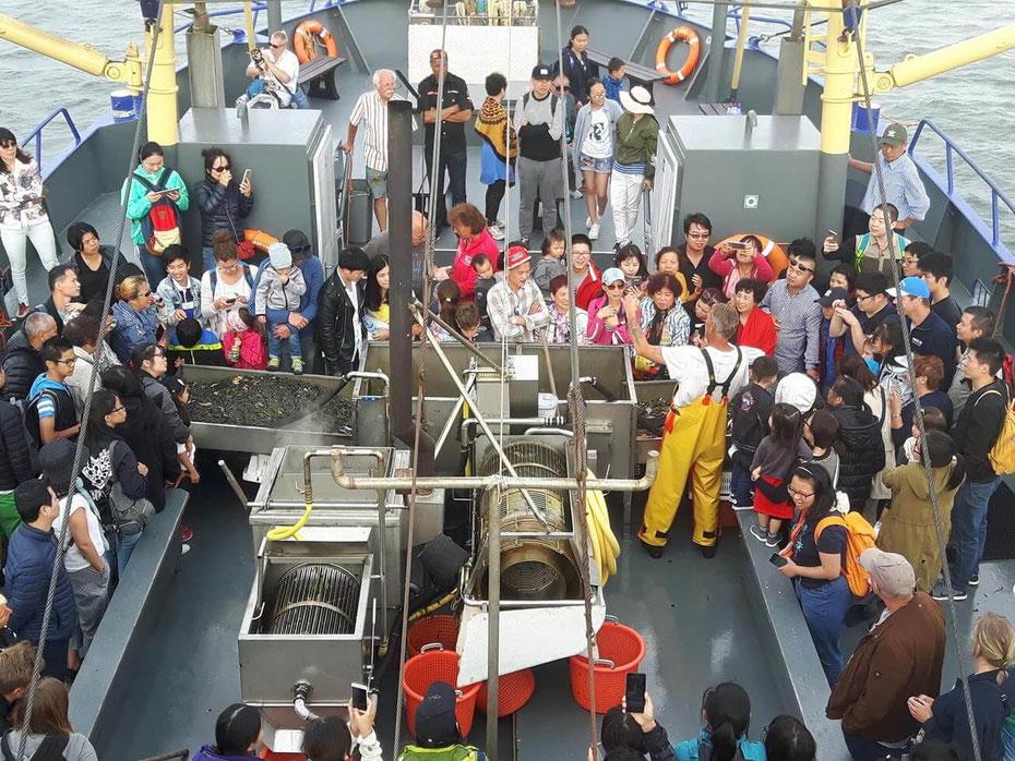 """<img src=""""image.jpg"""" alt=""""Aan dek van de garnalenboot geeft de schipper uitleg aan de toeristen over het vangen van garnalen"""">"""
