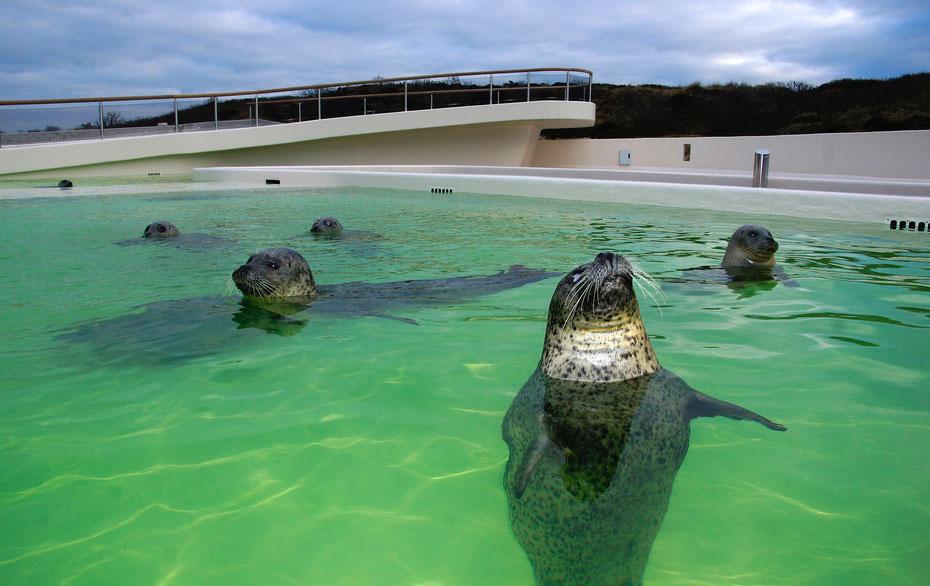 """<img src=""""image.jpg"""" alt=""""Bruinvissen en zeehonden in Ecomare op Texel"""">"""