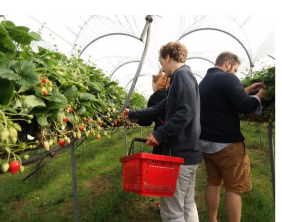 """<img src=""""image.jpg"""" alt=""""Zelfplukkers in de Pluktuin op Texel aan het aardbeien plukken"""">"""