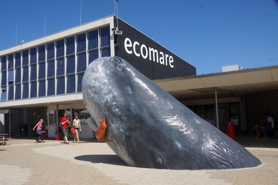 """<img src=""""image.jpg"""" alt=""""Ecomare bij strandslag 17 op Texel is het centrum voor de Wadden en de Noordzee"""">"""