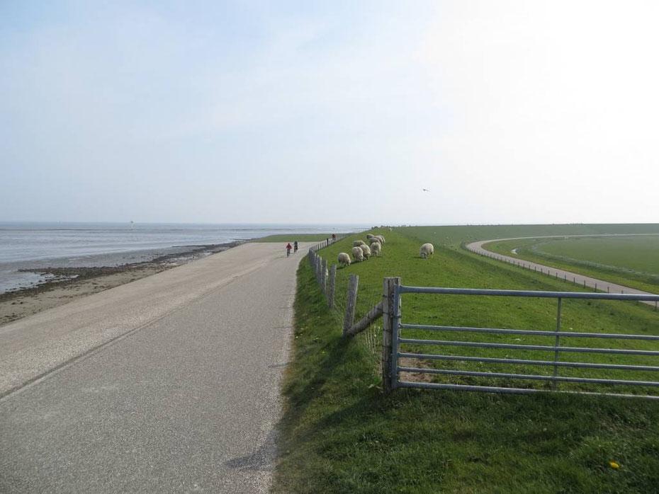 """<img src=""""image.jpg"""" alt=""""Fietsers op de Waddendijk, met links de Waddenzee bij De Cocksdorp, Texel"""">"""