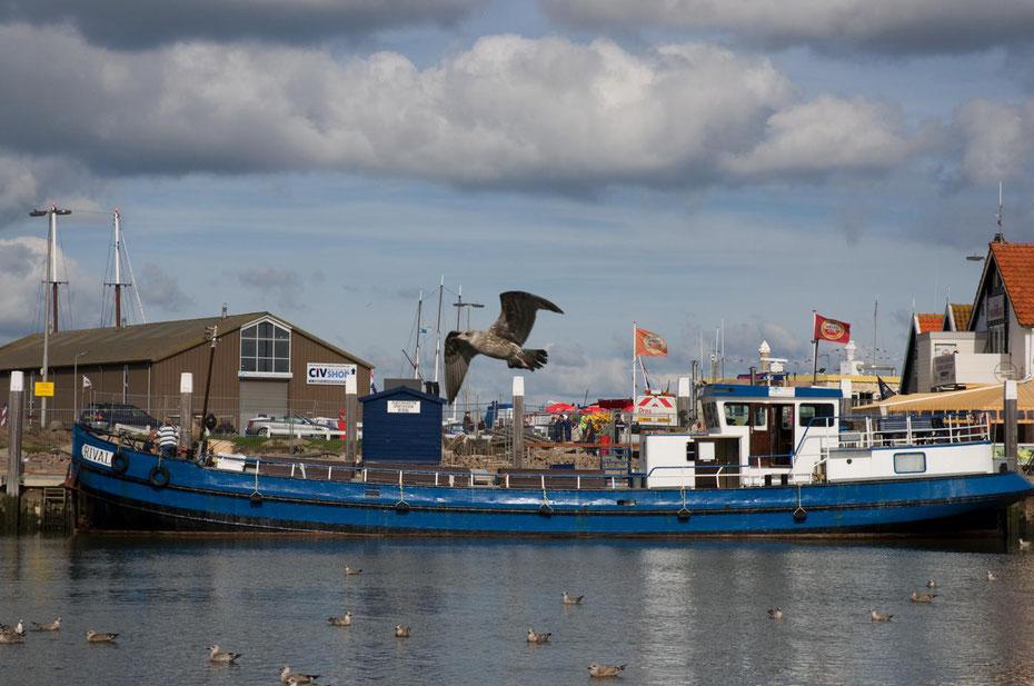 """<img src=""""image.jpg"""" alt=""""Het M.S. Rival , voor de sportvisserij, aan de kade van de haven van Oudeschild op Texel"""">"""
