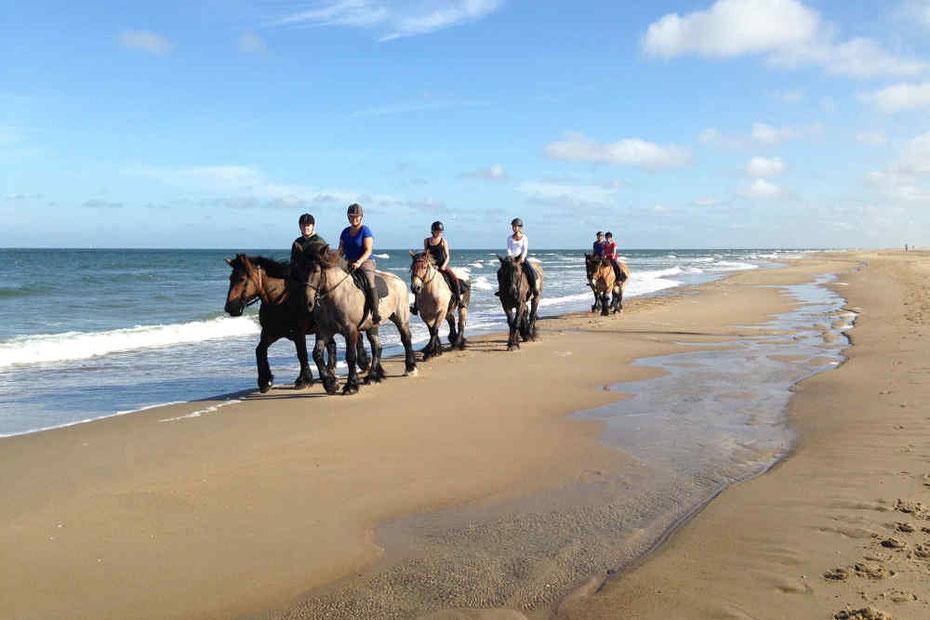 """<img src=""""image.jpg"""" alt=""""Zes Belgische trekpaarden met ruiters op het strand van Texel"""">"""