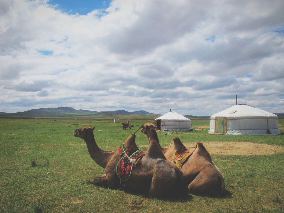 bigousteppes mongolie yourte route chameaux