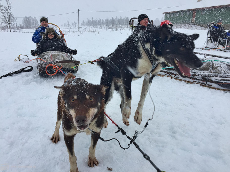 Huskys - Winter im hohen Norden