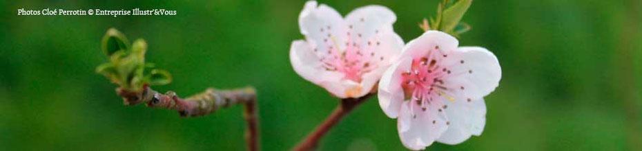 Fleurs roses de printemps pour illustrer la philosophie de l'entreprise Illustr'&Vous de Cloé Perrotin