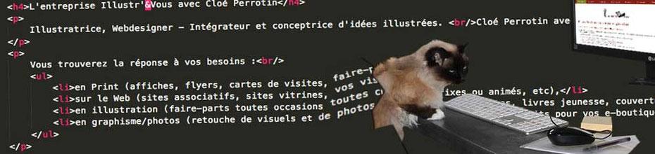 Ankara la chatte Sacré de Birmanie, de Cloé Perrotin Webdesigner et Intégratrice Web pour vos projets internet via l'entreprise Illustr'&Vous