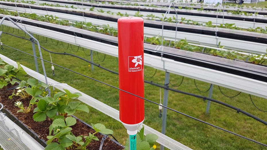 Plantcare Sensor Rinnenkultur Erdbeere