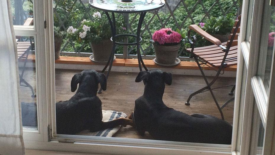 Hundeleinenmanufaktur Sassnitz auf Rügen