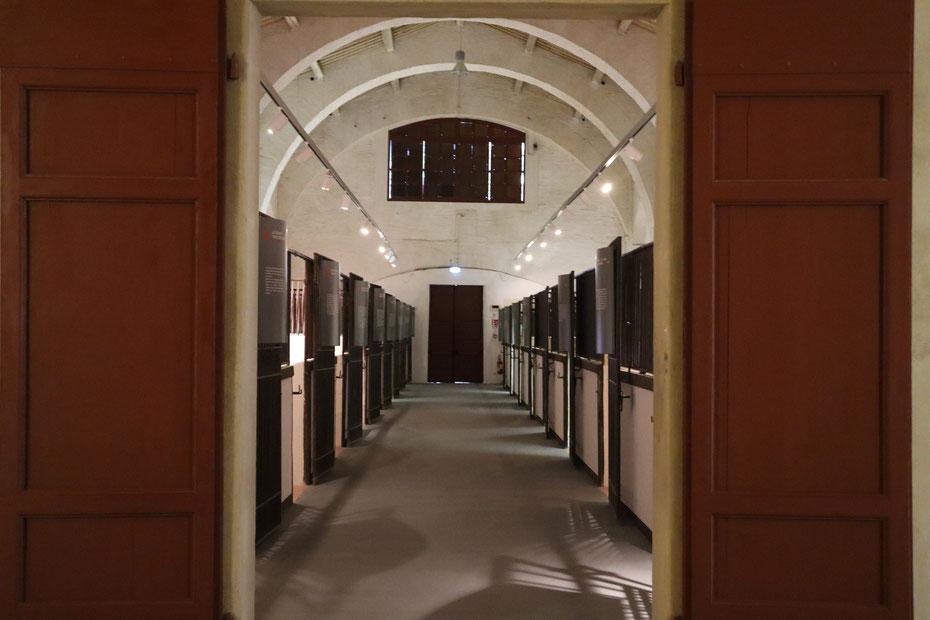 Sale del Museo Archeologico di Pisa - Museo delle Navi Anriche di Pisa