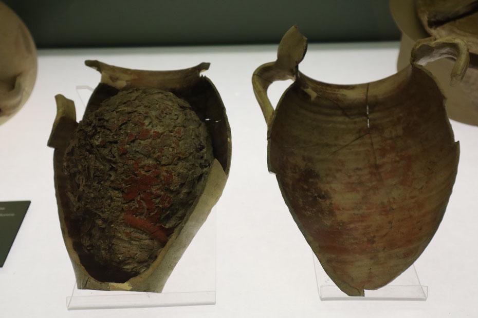 Anfora con conserva di pesce, Età augustea - Museo delle Navi Antiche di Pisa