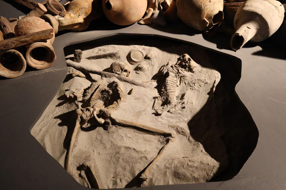 Resti del marinaio e del suo cane - Museo delle Navi Antiche di Pisa