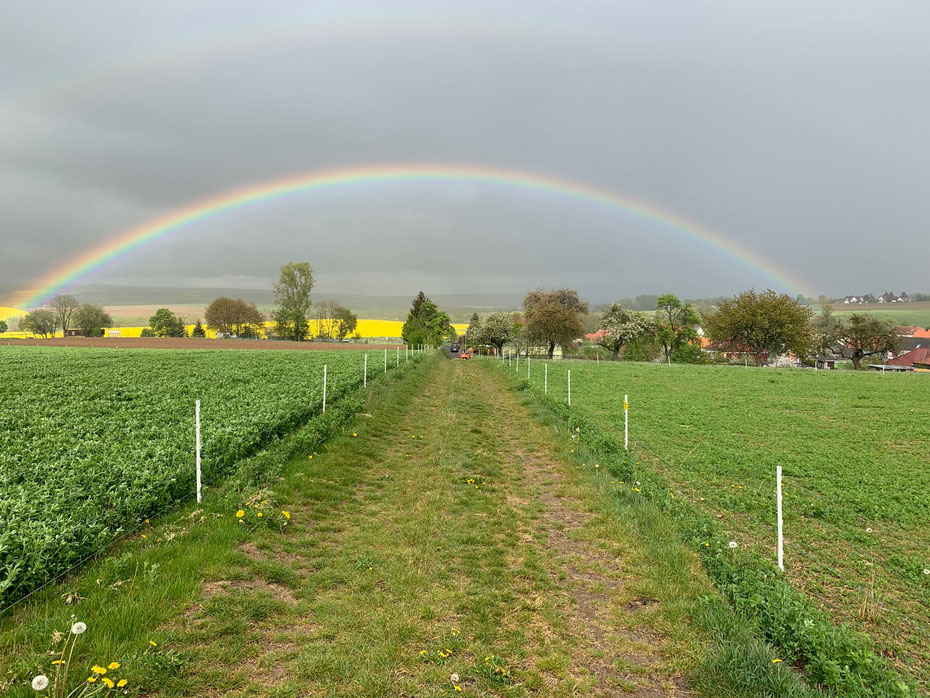 Regenbogen Feld Wiese Grün Erholung Leben Schön Tiere Weide Schafe Elektrozaun Zaun Dorf Landwirtschaft Luzerne Luzerneheu Heu