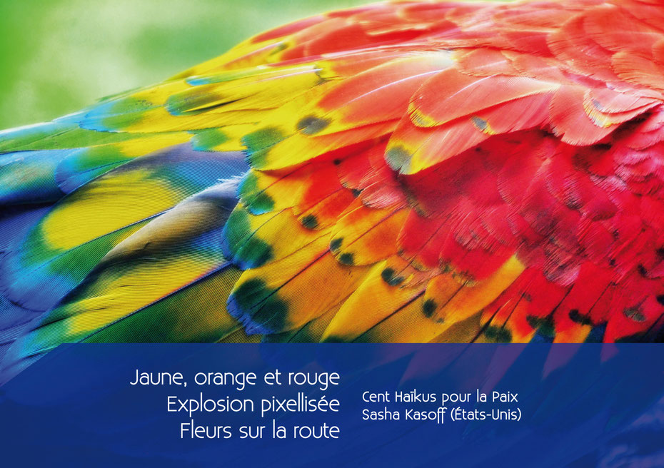 aras, plumes colorées, haïkus pour la paix - image Pixabay
