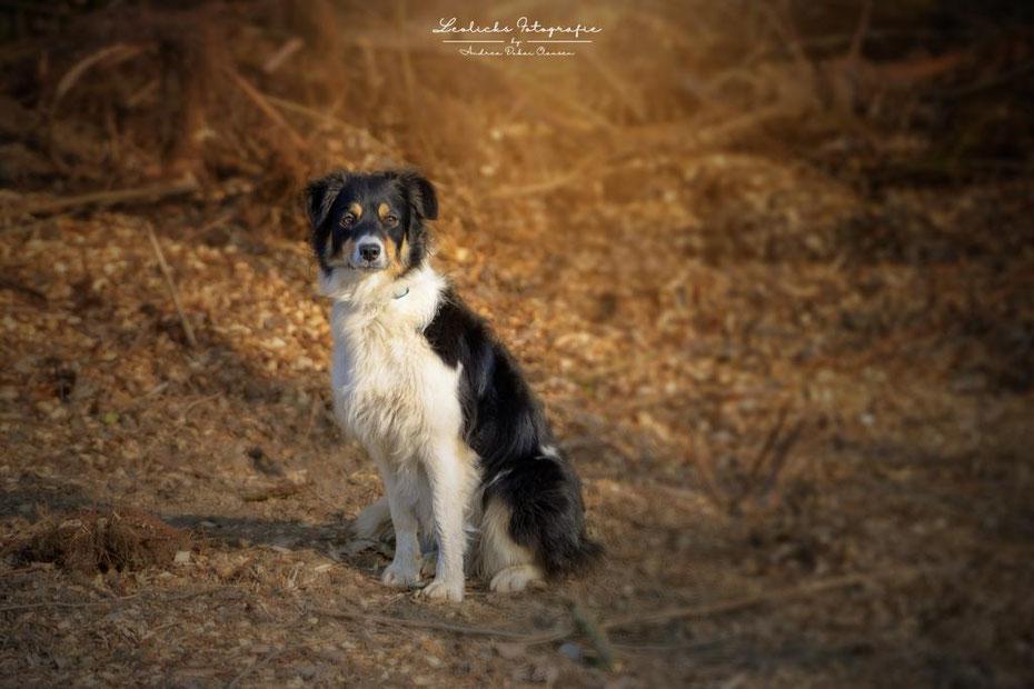 Verhaltenstraining für Hunde