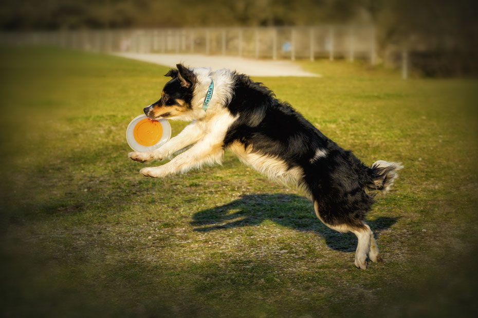 Positives Hundetraining