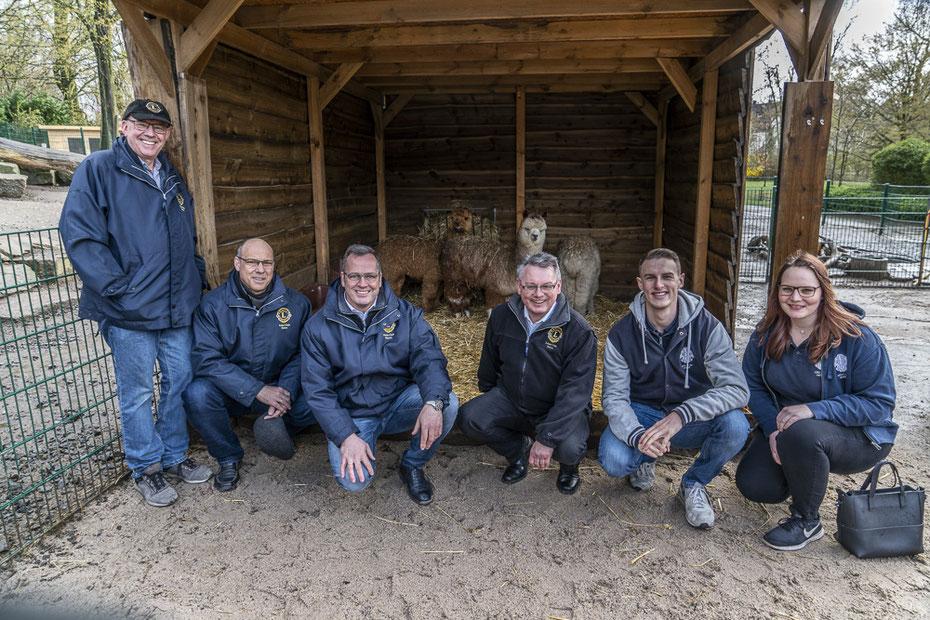 """Lions Hilfswerk schafft Alpakas für Gysenberg an  """"Wir haben schon länger darüber nachgedacht, Alpakas in unserem Tierpark aufzunehmen"""", erklärte Thilo Sengupta, stellvertretender Leiter des Fachbereichs Stadtgrün. Dass dieses Vorhaben nun in die Tat umge"""