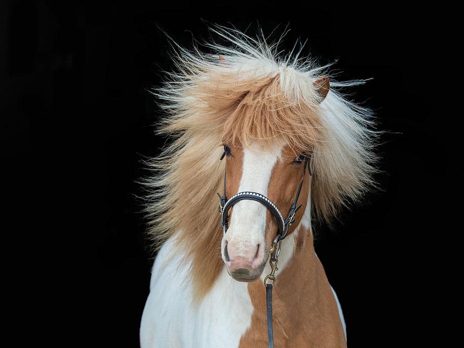 #photography #pferdefotografie #pferdefoto #pferdefotograf #pferdefotoshooting #pferde #reiten #horses #horsesofinstagram #horsephotography #equineartist #equinephotographer #equinephoto #equinelife #bestofequines #equine #soulhorse #pferdeliebe #pferdesc